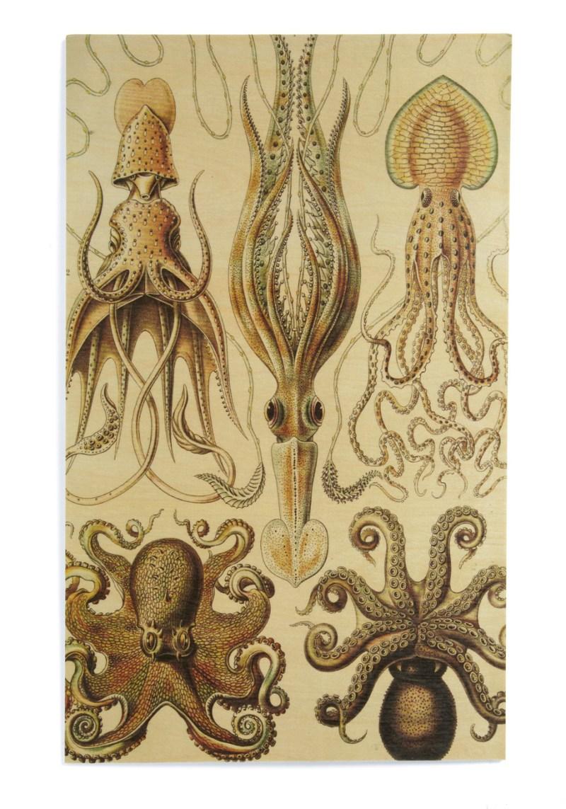 octopus biology print
