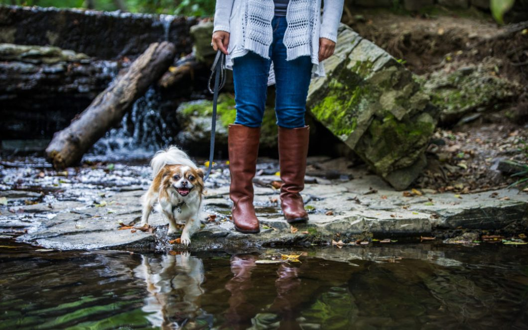 Keep your dog leashed: thoughts from one friendly pet owner to another