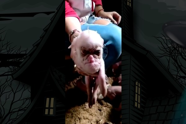 Is This a Leaked Video of a Human-Pig Hybrid Chimera?