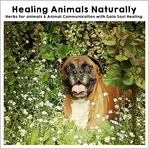 Off-Grid Living Festival. Events Victoria. Healing animals naturally with Gaia Soul Healing.