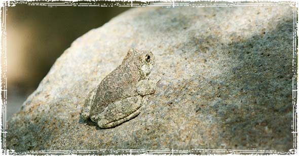 Animals Frog on a Rock