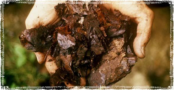 Compost Materials