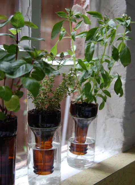 wine-bottle-garden1