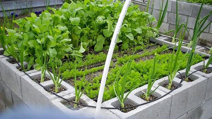 Above Ground Garden Cinder Blocks