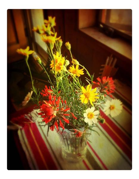 3-22-2015-Wildflowers-600px