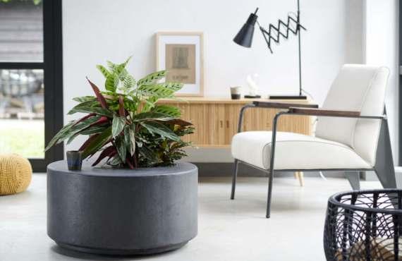 Büro Pflanzen am Arbeitsplatz