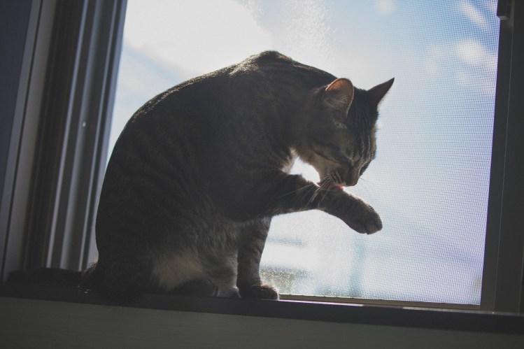 ペットのための終活