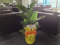 KDDIウェブコミュニケーションズさんから観葉植物もいただきました。ありがとうございます!