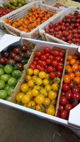 採れたてのトマト