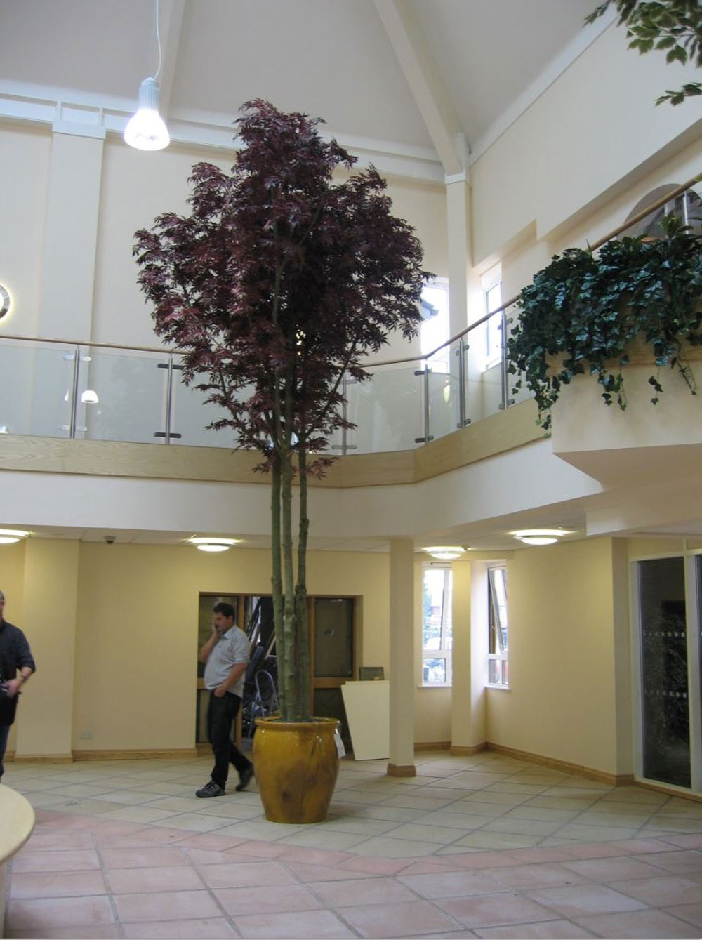 Tall Trees Gallery For Offices Interiors Office Landscapes