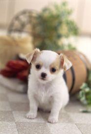 愛犬撮影会