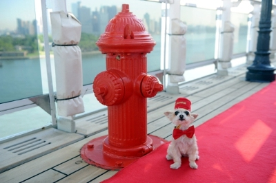 cunard cruises queen mary dog on deck2