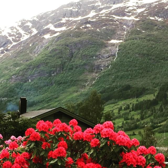 Norwegian cruises Jade cruise ship Norway flowers