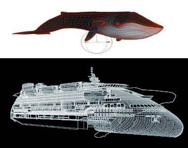 Peaceboat Ecoship cruises whale simularity