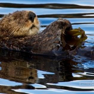 Alaska cruise sea otters
