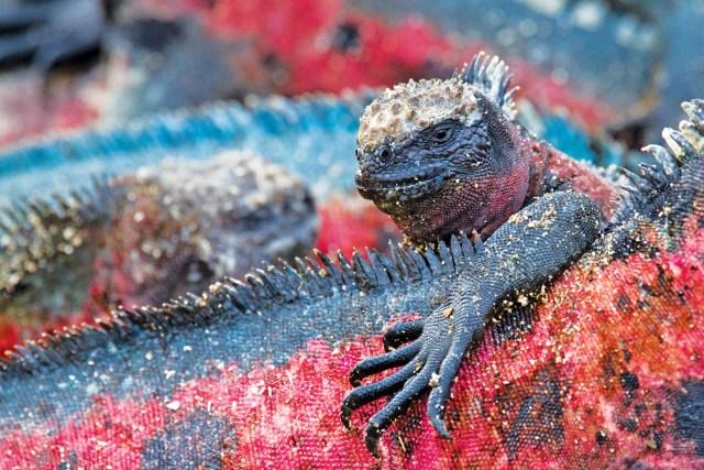 Espanola Island, Galapagos Lindblad Expeditions cruises
