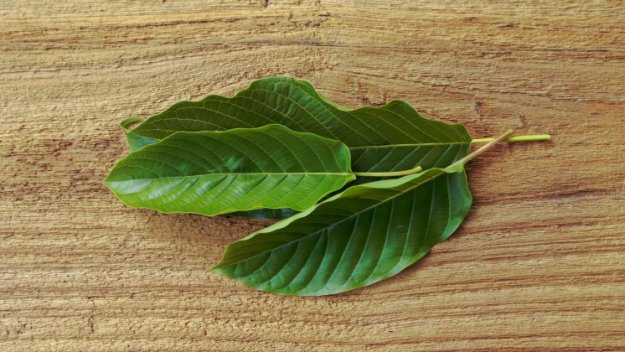 Lasts Longer | Green Vein Bali Kratom: 9 Things You Need To Know