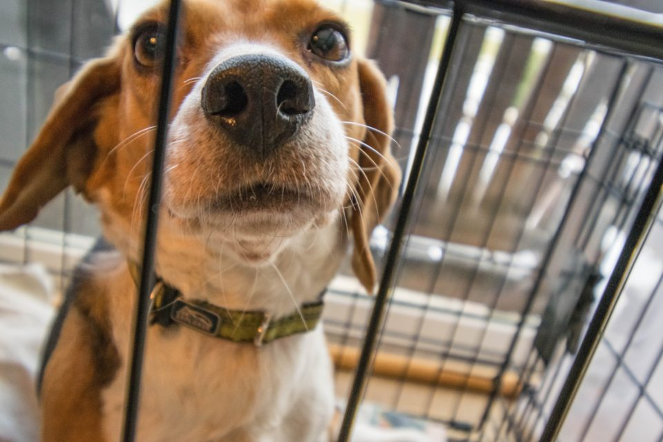 The Best Dog Crates! - Plastic, Wire or Soft, Which Should You Choose?