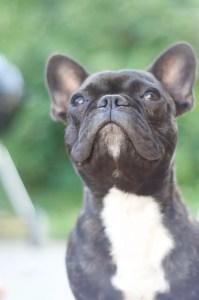 Small black dog