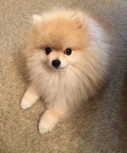 A cute hairy dog