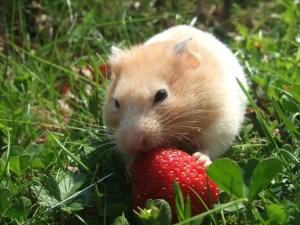 Small mammal