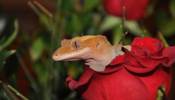 Best Food for Leopard Geckos - What Do They Eat? - 8