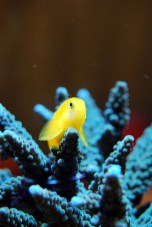 A yellow aquatic animal