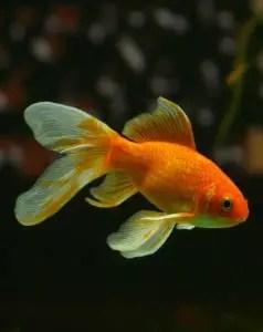 A swimming pet
