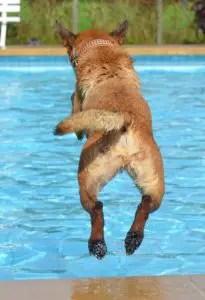A dog jumping