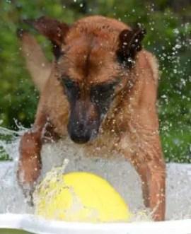 A dog in a pool