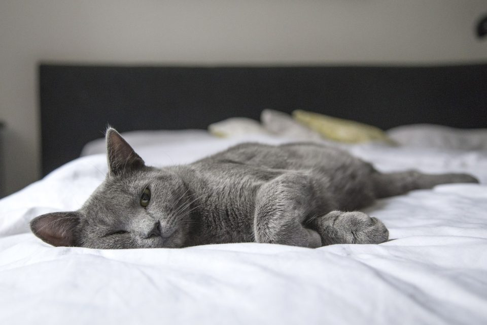 A cat on a bed