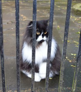 Cat behind a gate