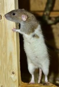 A small mammal