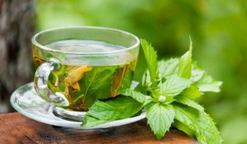 green tea to lose weight in winters