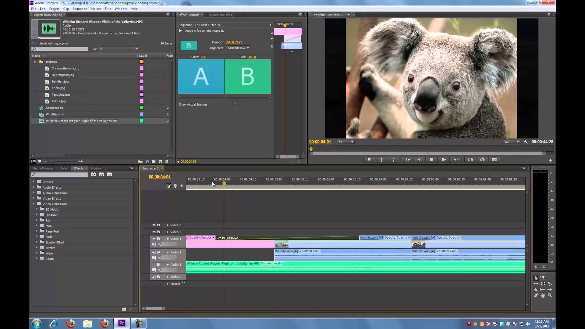 Adobe Premiere Pro CS6 panda film making