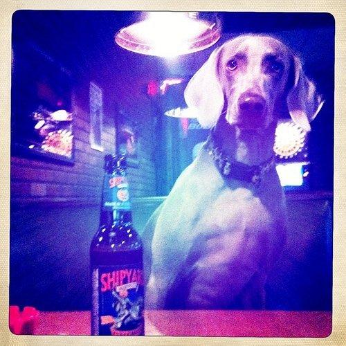 Dog-friendly bars