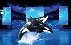 SeaWorld's Christmas Celebration