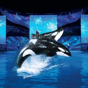 SeaWorld Orlando's Christmas Celebration