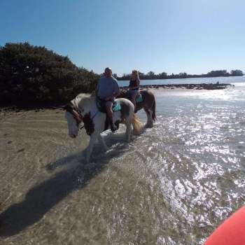 C Ponies