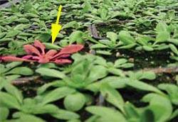 plant_land_mine.jpg