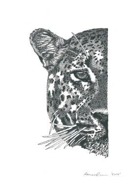 Renee Cerncic, Amur Leopard