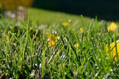 in the green grass 1
