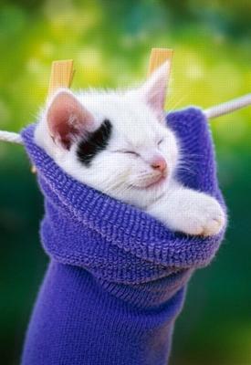 kitten in cotton sock