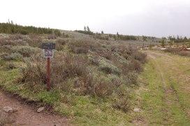 Trail Junction, Left to Bunsen Peak, Straight several miles to Osprey Junction