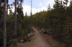 Wooded half of the trail