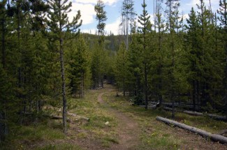 Beginning of Solfatara Creek Trail
