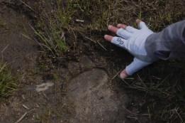 Stay vigilant; we also saw black bear tracks on the trail.
