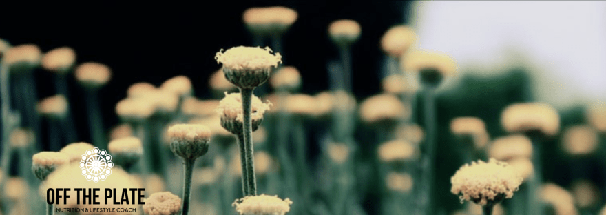 Field of flowers with one area in focus