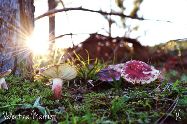 Sugestões de Meditação Na Natureza foto de Valentina Markus