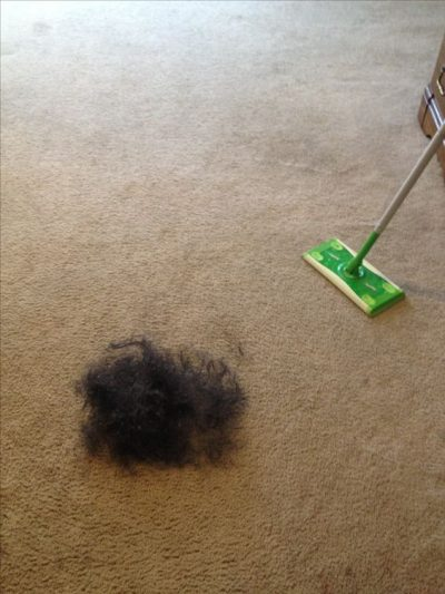 Use swiffer to collect pet hair from your carpet. Then you can vacuum without clogging up your machine.
